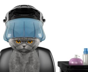 Cat bathing services in englewood cliffs, NJ
