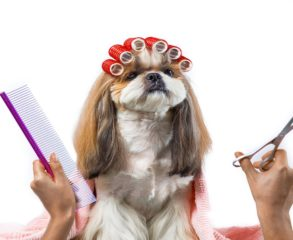 Complete dog grooming services