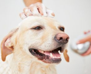 Dog bathing services in englewood cliffs, NJ