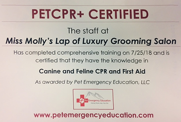 pet-cpr-certified